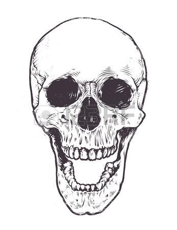 347x450 Anatomic Skull Vector Art. Detailed Hand Drawn Illustration