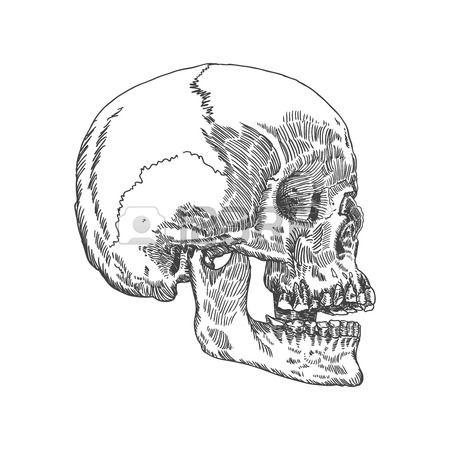 450x450 Anatomic Skull With Open Mouth Or Jaw, Weathered And Museum