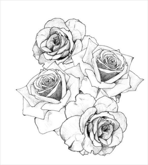Open Rose Drawing