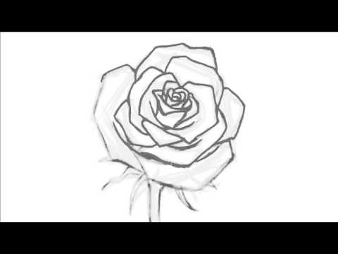 480x360 How To Draw An Open Rose