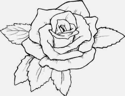 400x307 Rose Drawing ~ The All Image