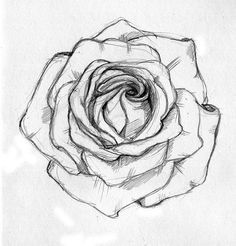 236x246 How To Draw A Open Rose Tattoo Design