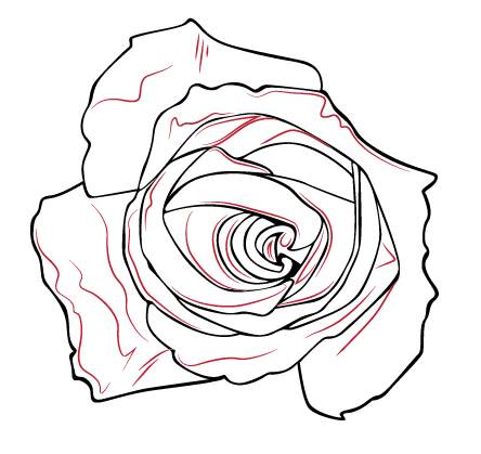 444x419 How Draw A Rose From Above How