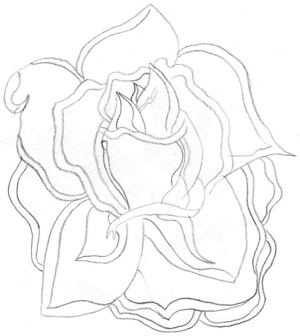 1040x1164 Open Rose Drawing Outline