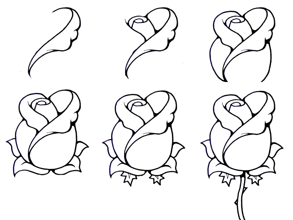 Open Rose Drawing Step By Step