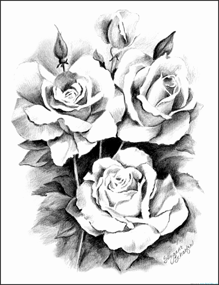 747x972 Open Rose Drawing