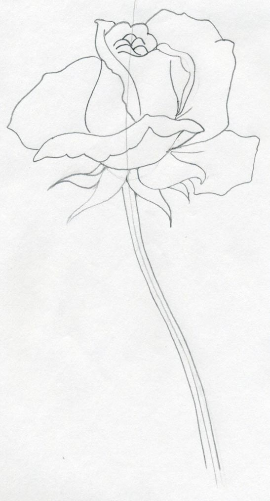 547x1013 Draw A Rose Quickly, Simply And Easily