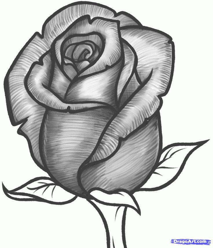 736x855 Drawing Rose