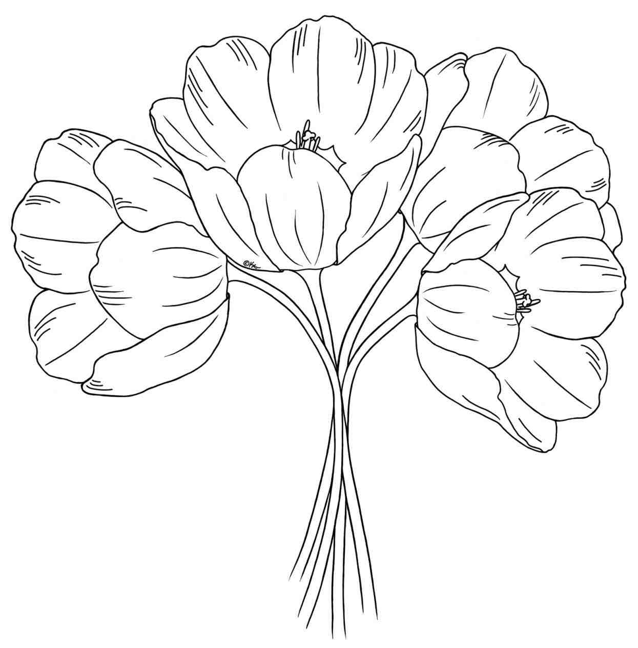 1245x1264 Now Lets Draw This Tulip As Twice As Fast. Easy Kids Drawing