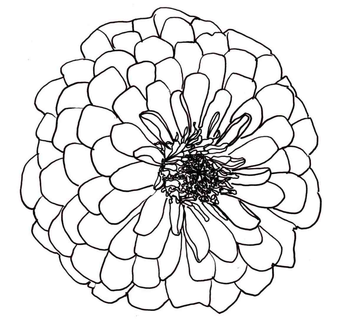 1167x1103 Urldircom Open Rose Drawing Outline Realistic Easy Step By Images