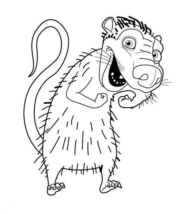Opossum Drawing at GetDrawings | Free download