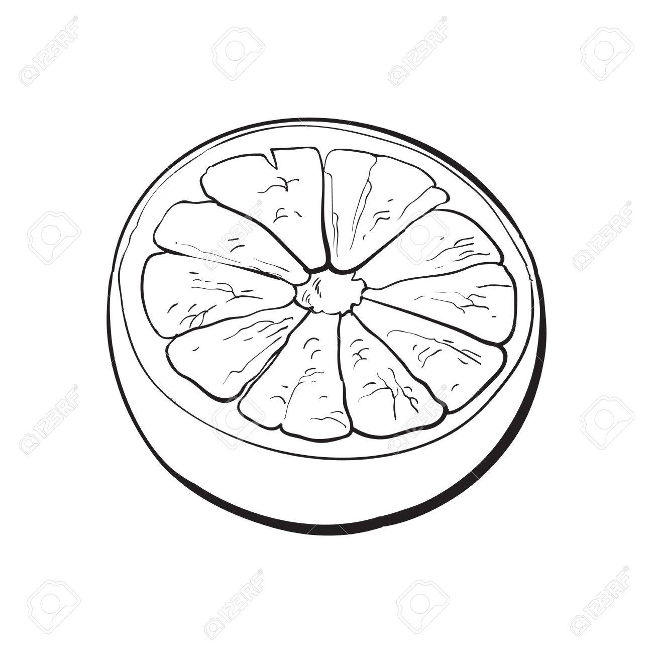 1300x1300 Half Of Ripe Grapefruit, Orange, Hand Drawn Black And White Sketch