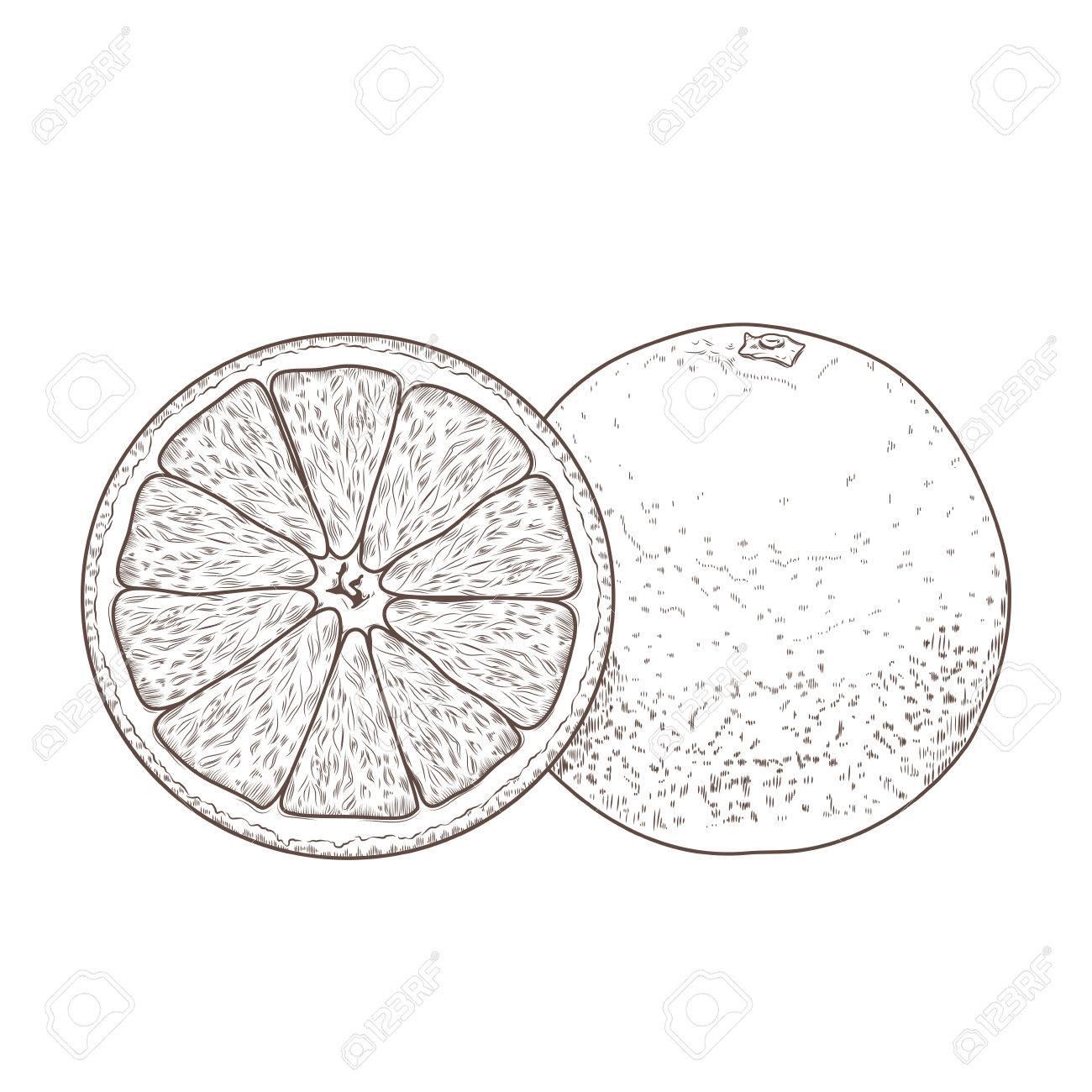1300x1300 Sliced Orange Fruits Isolated On A White Background. Hand Drawn