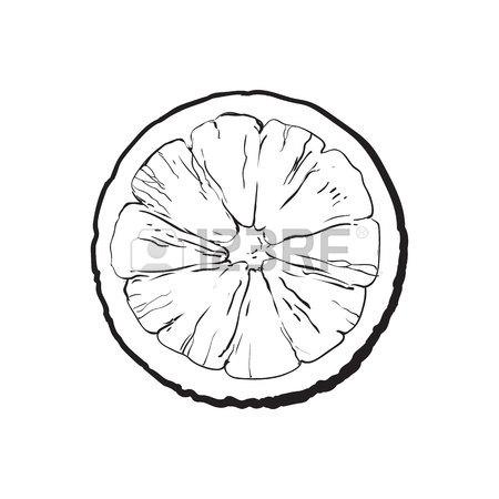 450x450 Top View Round Slice, Half Of Ripe Grapefruit, Red Orange, Sketch