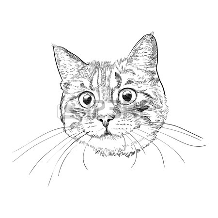 Orange Tabby Cat Drawing
