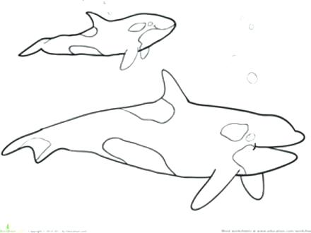 440x330 Killer Whale Coloring Pages Medium Size Of Coloring Drawing