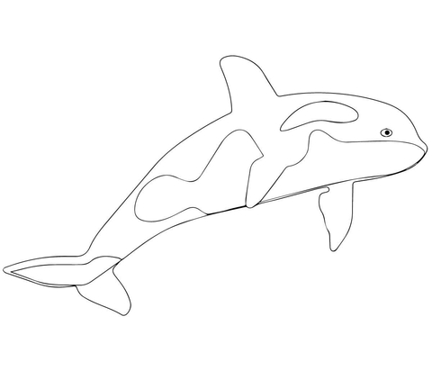 480x432 Killer Whale Or Orca Coloring Page Free Printable Coloring Pages