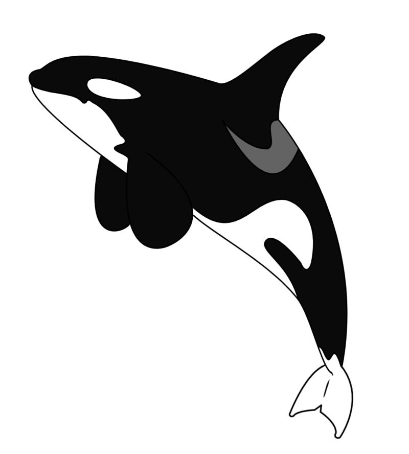800x888 Orca Tattoo