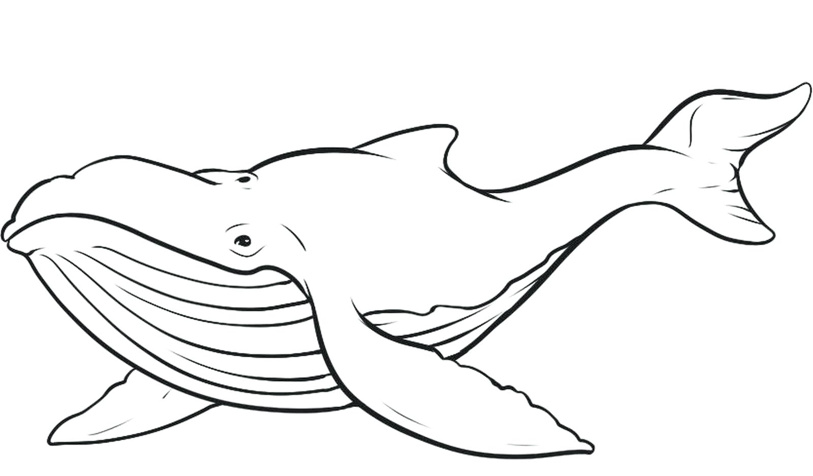 1600x938 Coloring Orca Coloring Pages Page Fascinating Draw Humpback Whale