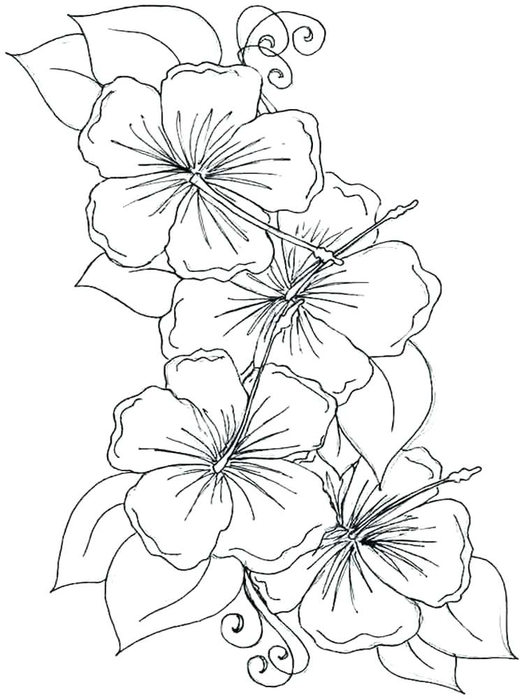Orchid Line Drawing at GetDrawings.com | Free for personal use ...