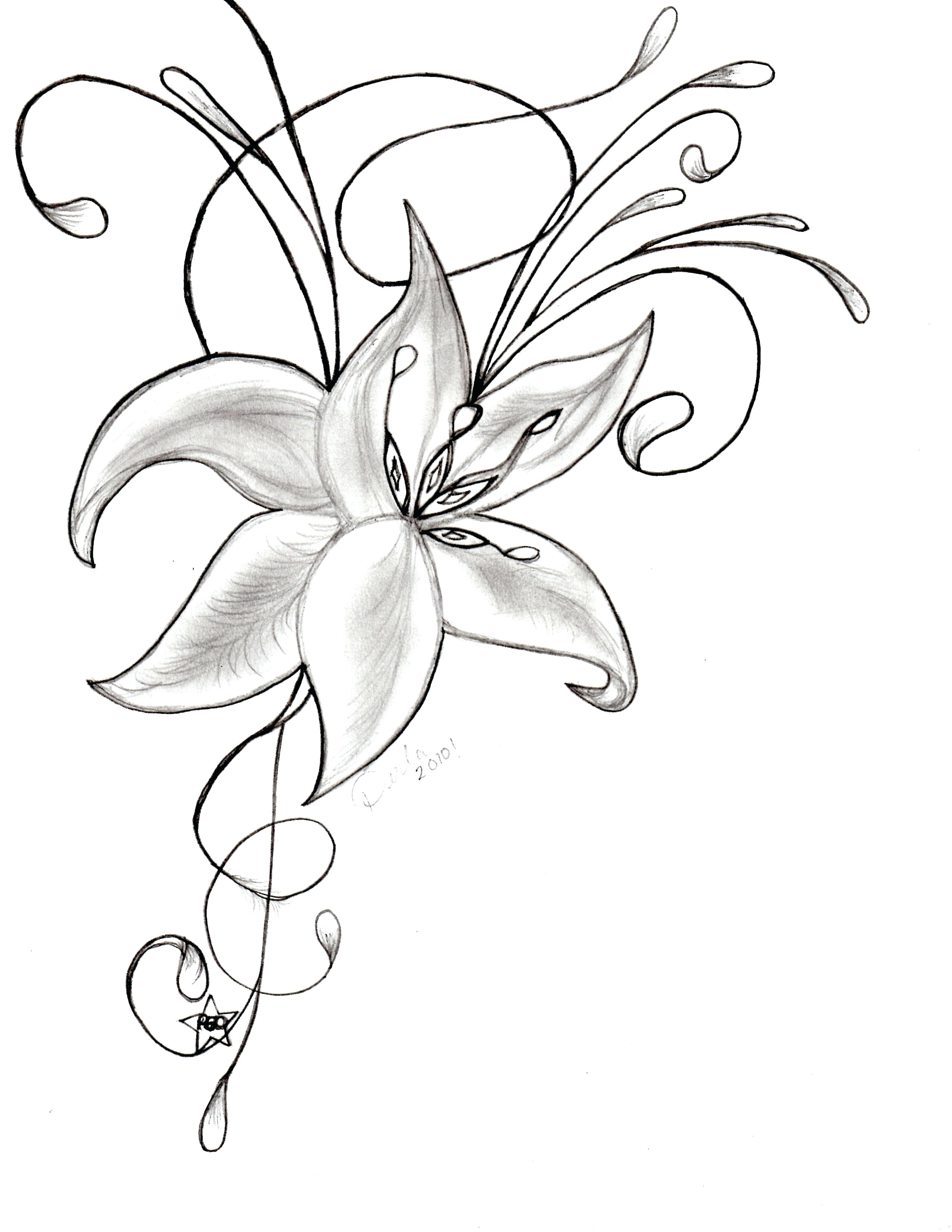 Orchids Drawing at GetDrawings.com | Free for personal use Orchids ...