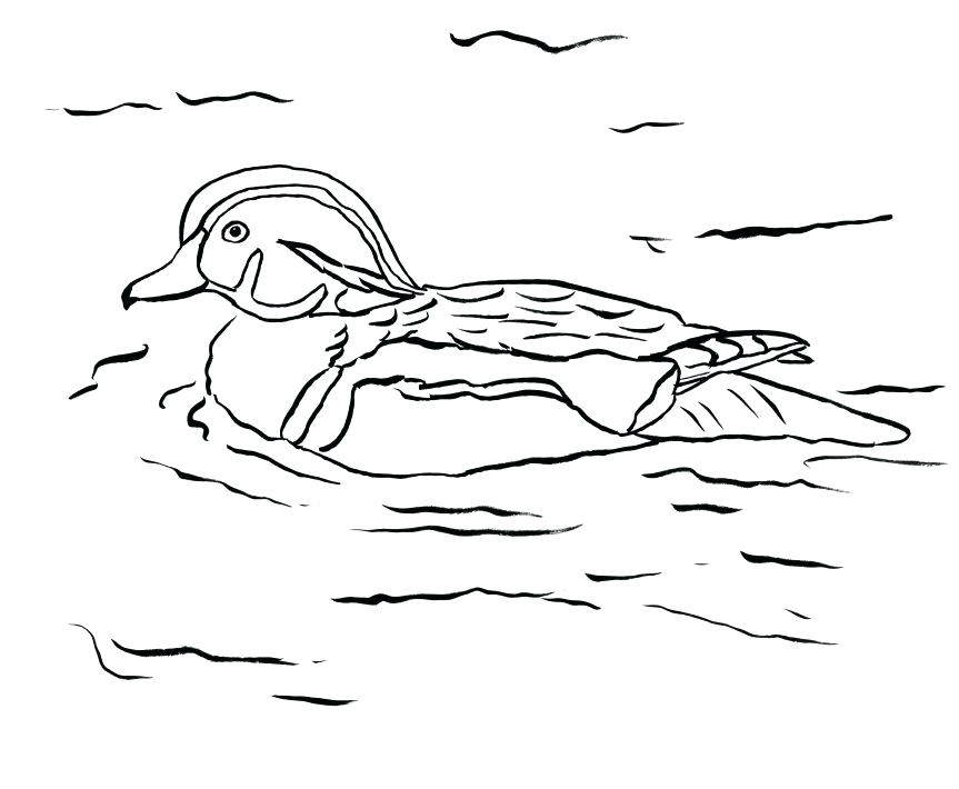 863x710 Oregon Duck Coloring Pages On Coloring Pages Of Ducks Baby