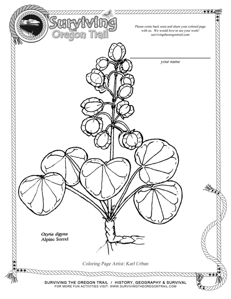 791x1024 Free Coloring Page Flowers Alpine Sorrel