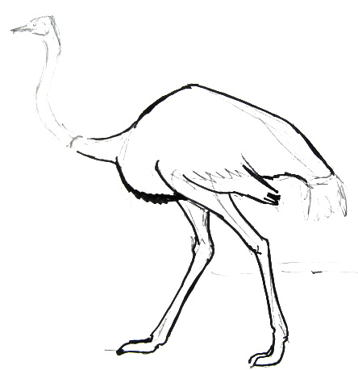 358x370 How To Draw An Ostrich