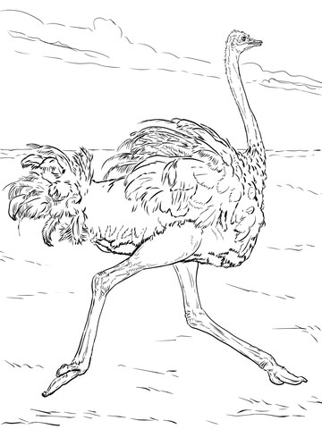 360x480 Ostrich Runs Coloring Page Free Printable Coloring Pages