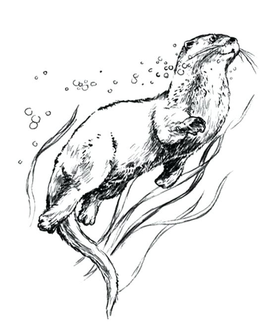 525x669 Otter Coloring Page Info Giant River Otter Coloring Page