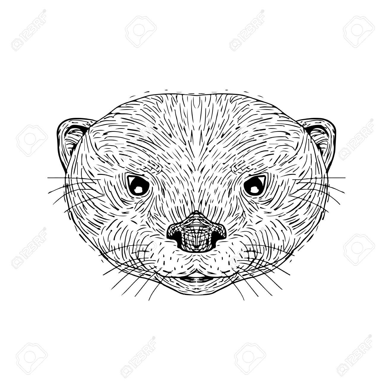 1300x1300 Illustration Of An Asian Small Clawed Otter Head Done In Hand