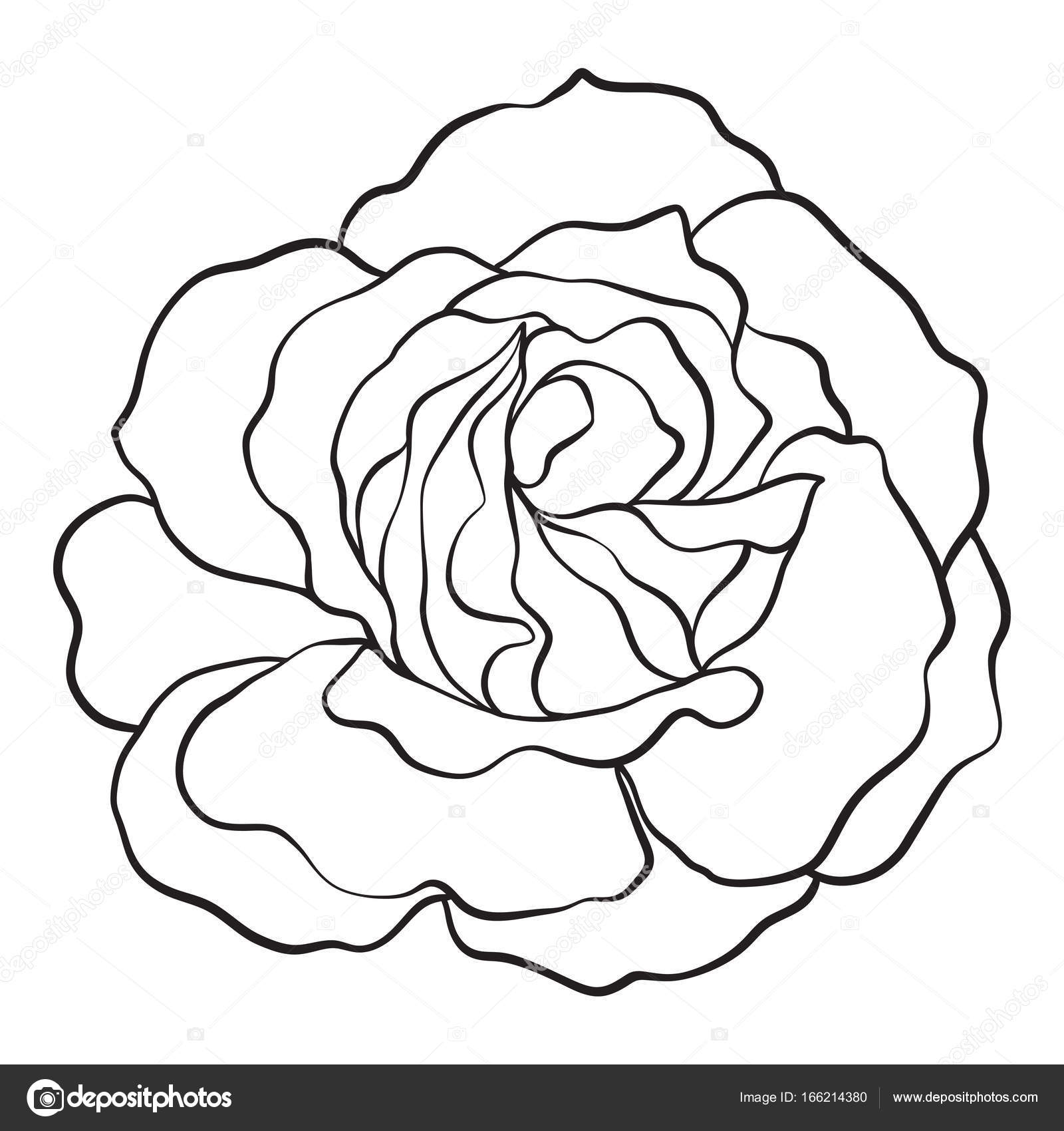 1600x1700 Isolated Rose. Outline Drawing. Stock Vector Illustration. Stock