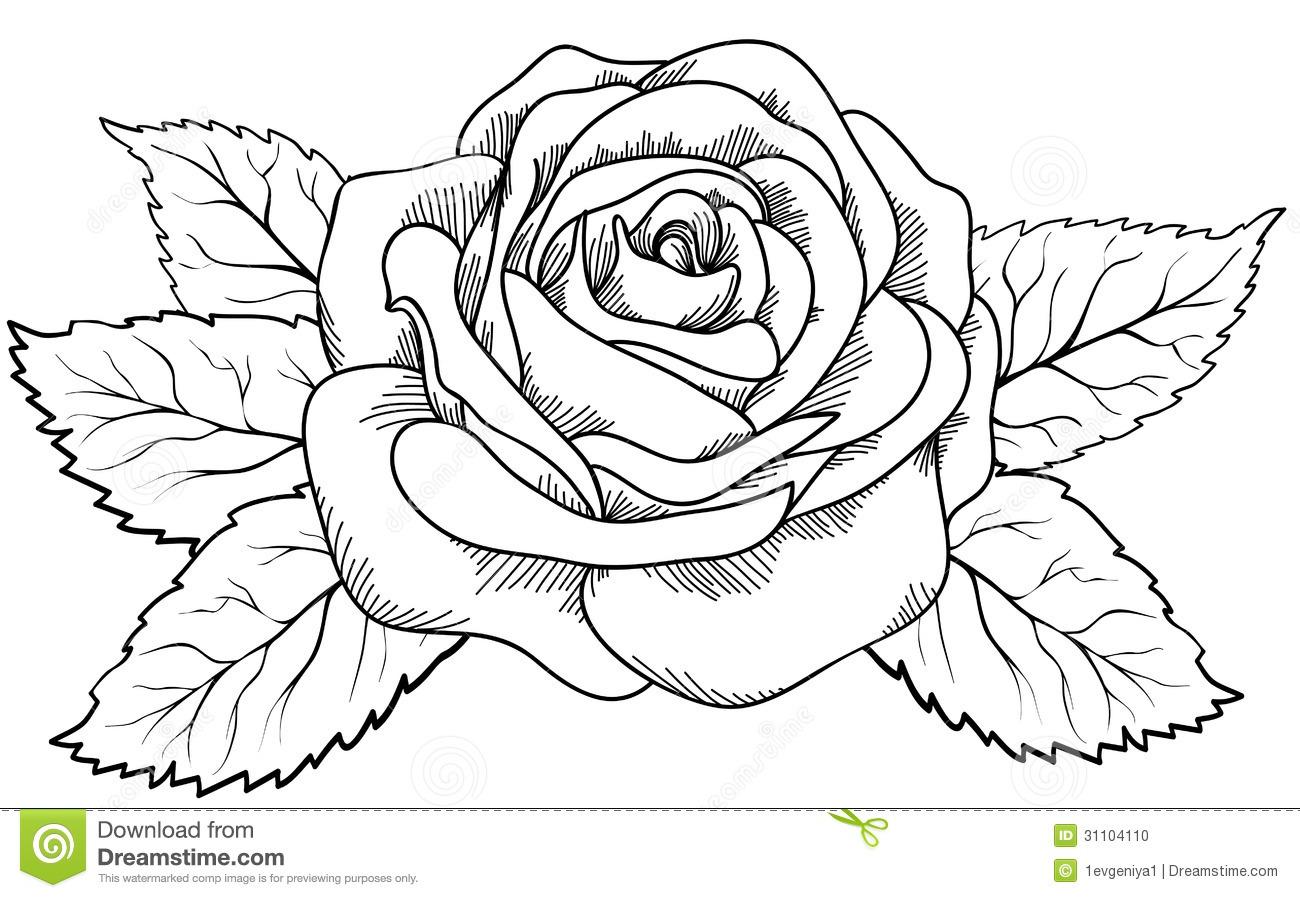 1300x898 Drawn Rose Outline