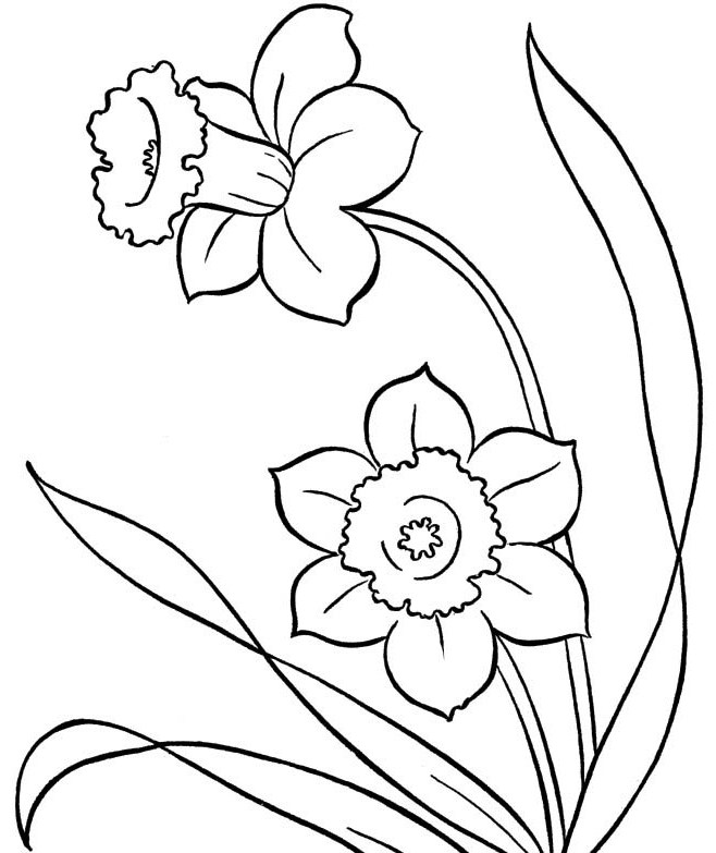 Outline drawing for colouring at getdrawings free for personal 658x783 spring flowers colouring pages photo crafts pinterest spring mightylinksfo Gallery