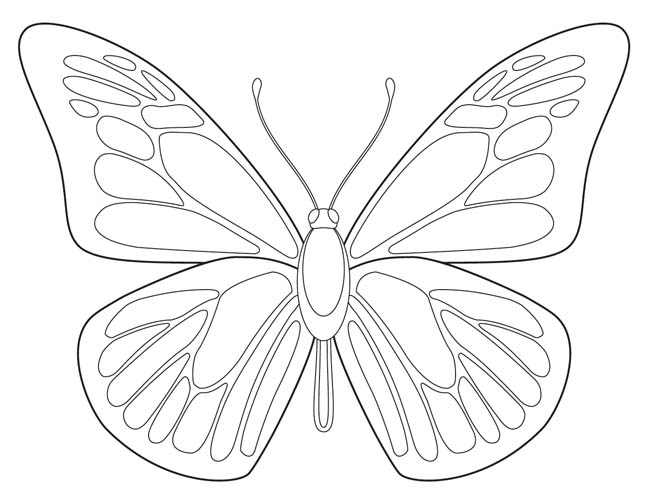 650x502 for the study of butterflies or for symmetrical coloring practice