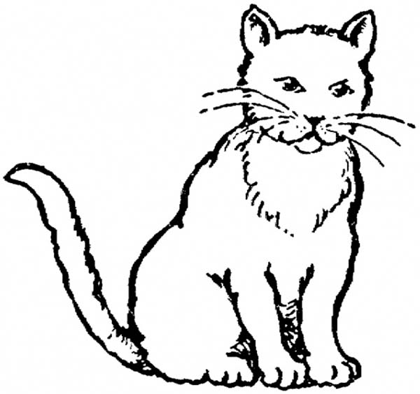 600x564 realistic drawing of kitty cat coloring page 30966
