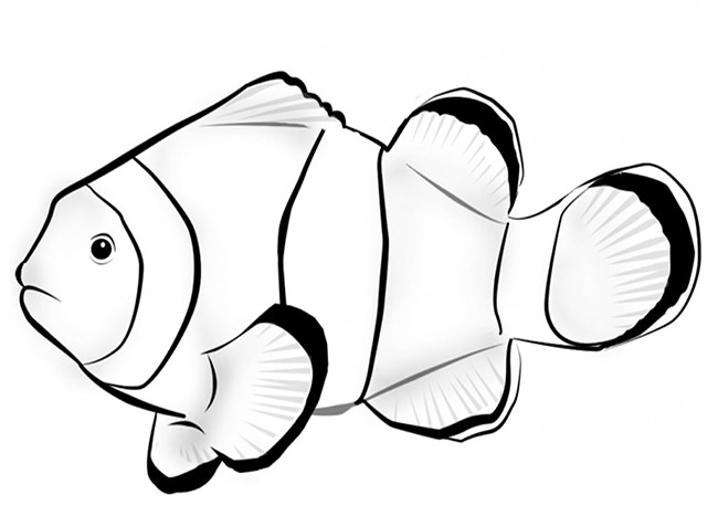 650x467 Fish Template Free Printable, Pdf Documents Download! Free
