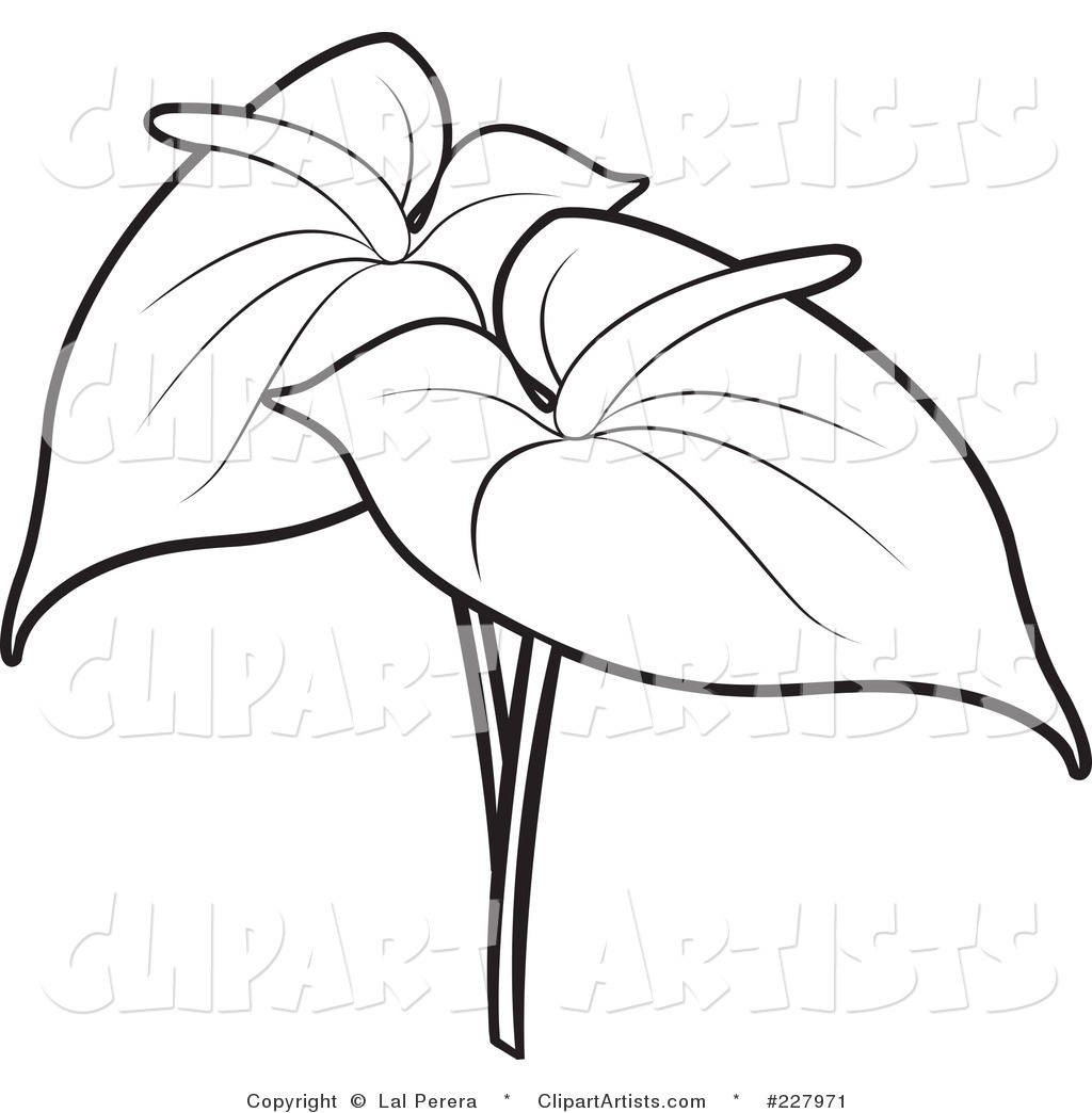 1024x1044 19 Outline Flower Vector Images