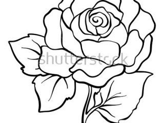 320x240 Outline Drawing Pictures Isolated Rose Outline Drawing Stock Line