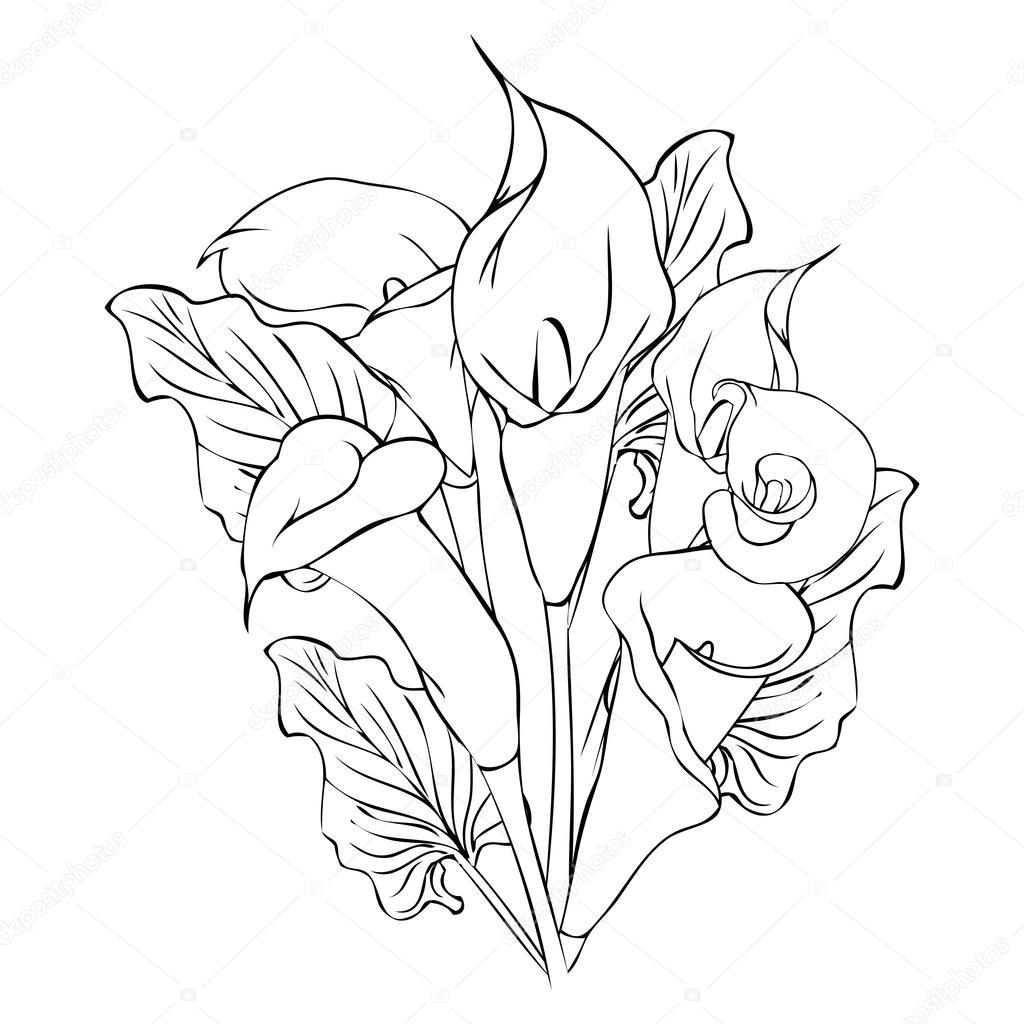 1024x1024 Calla Flowers Outline Drawing Stock Vector Vectorjade