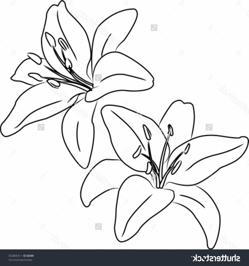 960x1024 Flower Drawing Outline Flower Drawing Outline Drawing Artisan