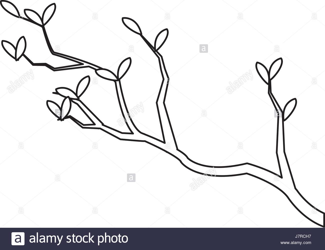 1300x1000 Outline Branch Leaves Tree Nature Japan Stock Vector Art