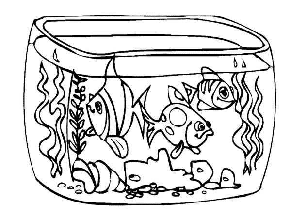 Outline Of Fish Drawing At Getdrawings Com Free For Personal Use