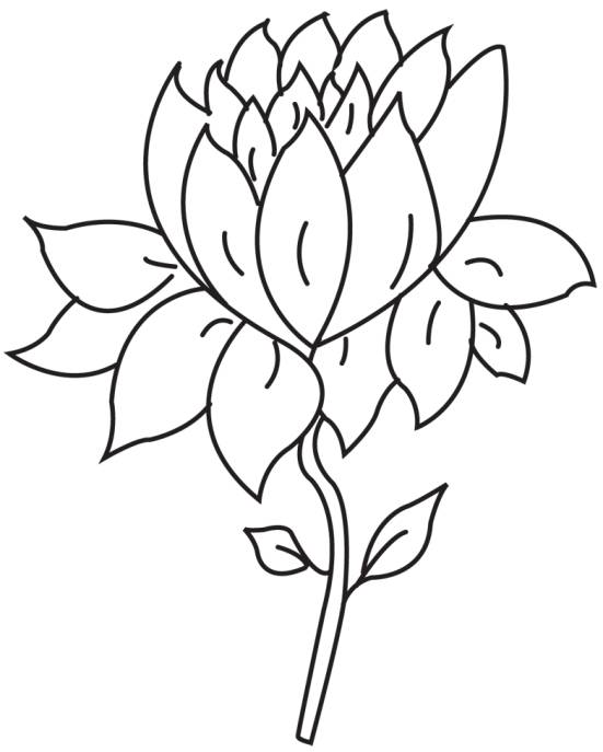 551x687 lotus flower outline