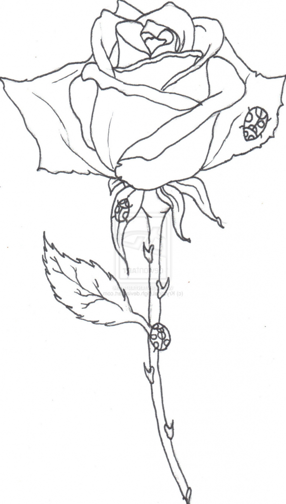 581x1024 Rose Outline Drawing