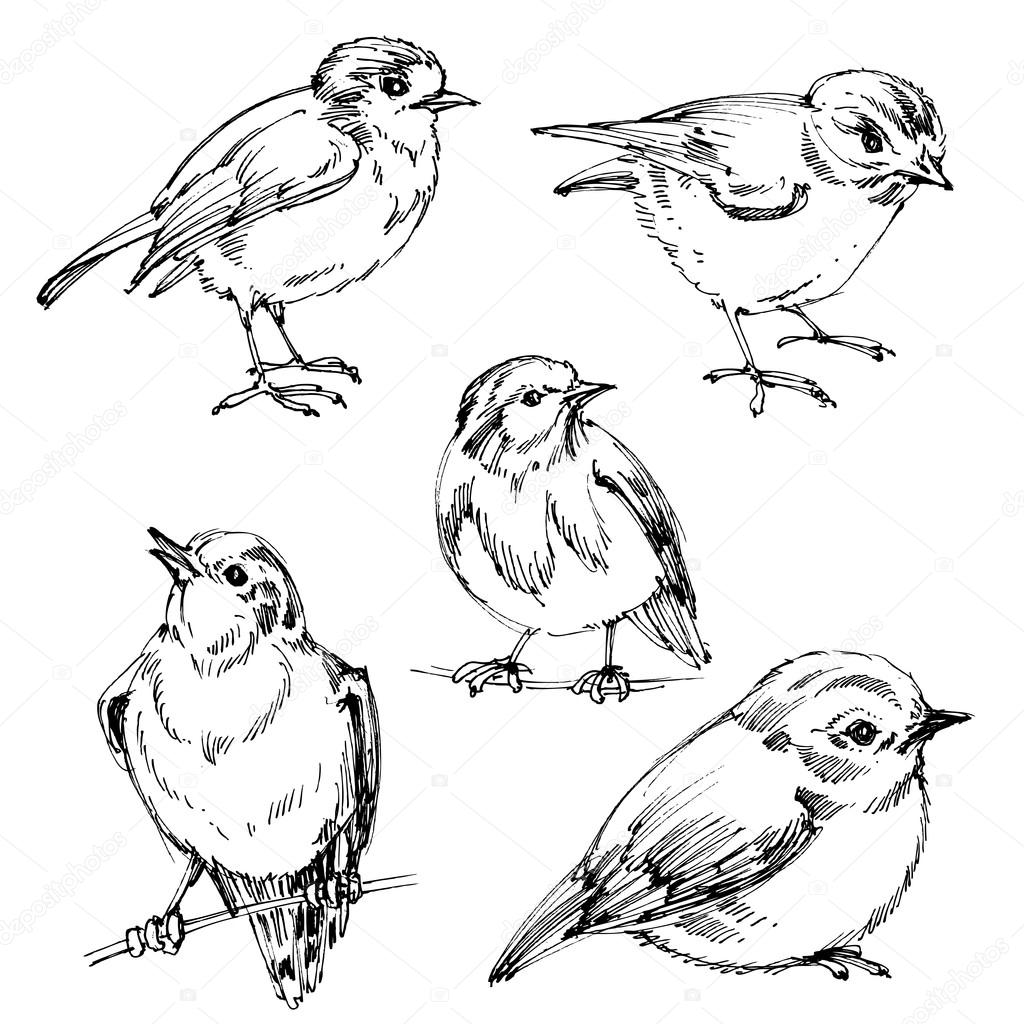 1024x1024 Birds Set. Hand Drawn Cute Birds, Black Outlines For Coloring