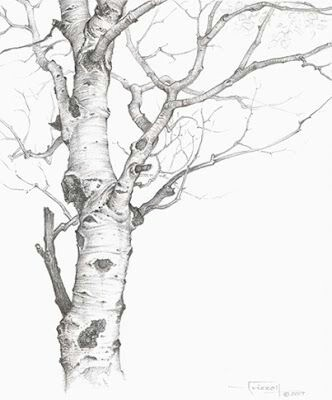 332x400 I Drew The Aspen Tree Outside My Window .please Give Credit If