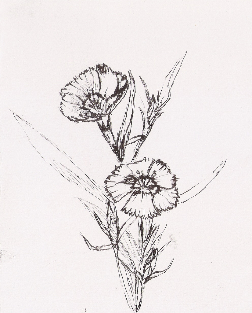 826x1024 Drawing Flowers Outside Pen And Ink On The Paper