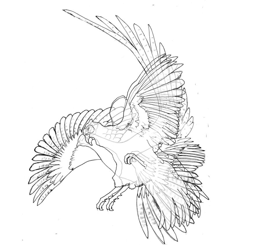 900x844 Pheasant Fighting Overlay 1 3bxx W900 H900 Wally Gilbert