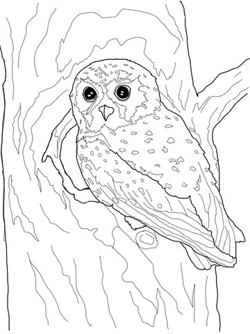 360x480 Elf Owl Coloring Page Free Printable Coloring Pages